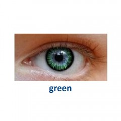 Eye Free Colors E-2Т (2 линзы)